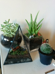 The plants I stupidly bought