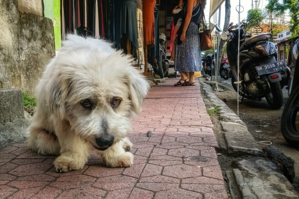Sad Dog on the Street