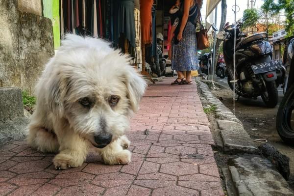 Sad Dog on the Street
